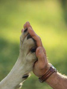 no al maltrato animal_abogados ley organica 1 de 2015 codigo penal