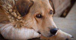 maltrado de animales delito de maltrato-abogados denuncias delitos de maltrato