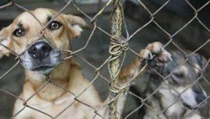 maltratoanimalcodigopenal-delito de maltrato de animales domesticos-abogados en jerez contra maltrato de animales
